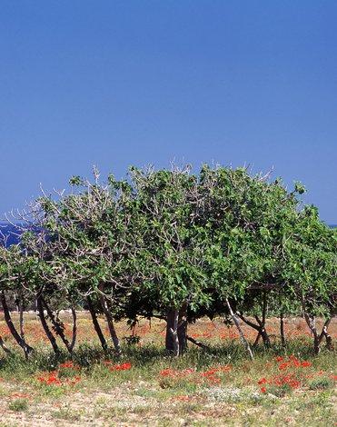 Hostal a Formentera Platja de Migjorn